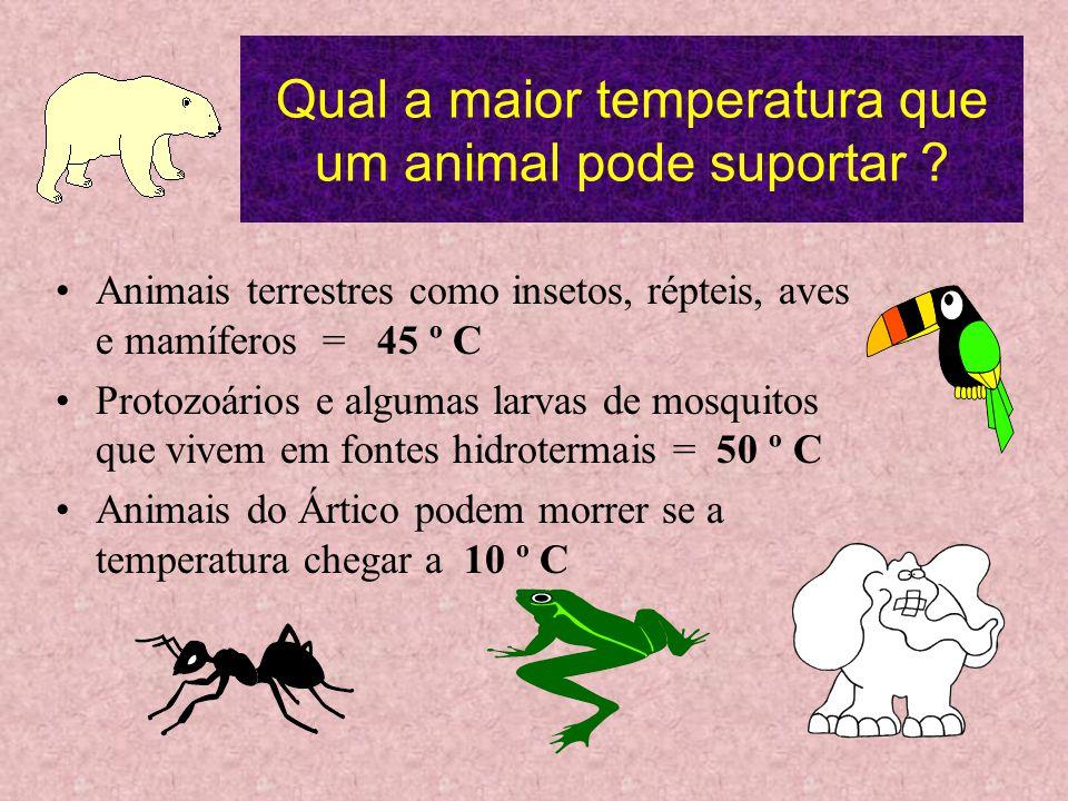 Qual a maior temperatura que um animal pode suportar .