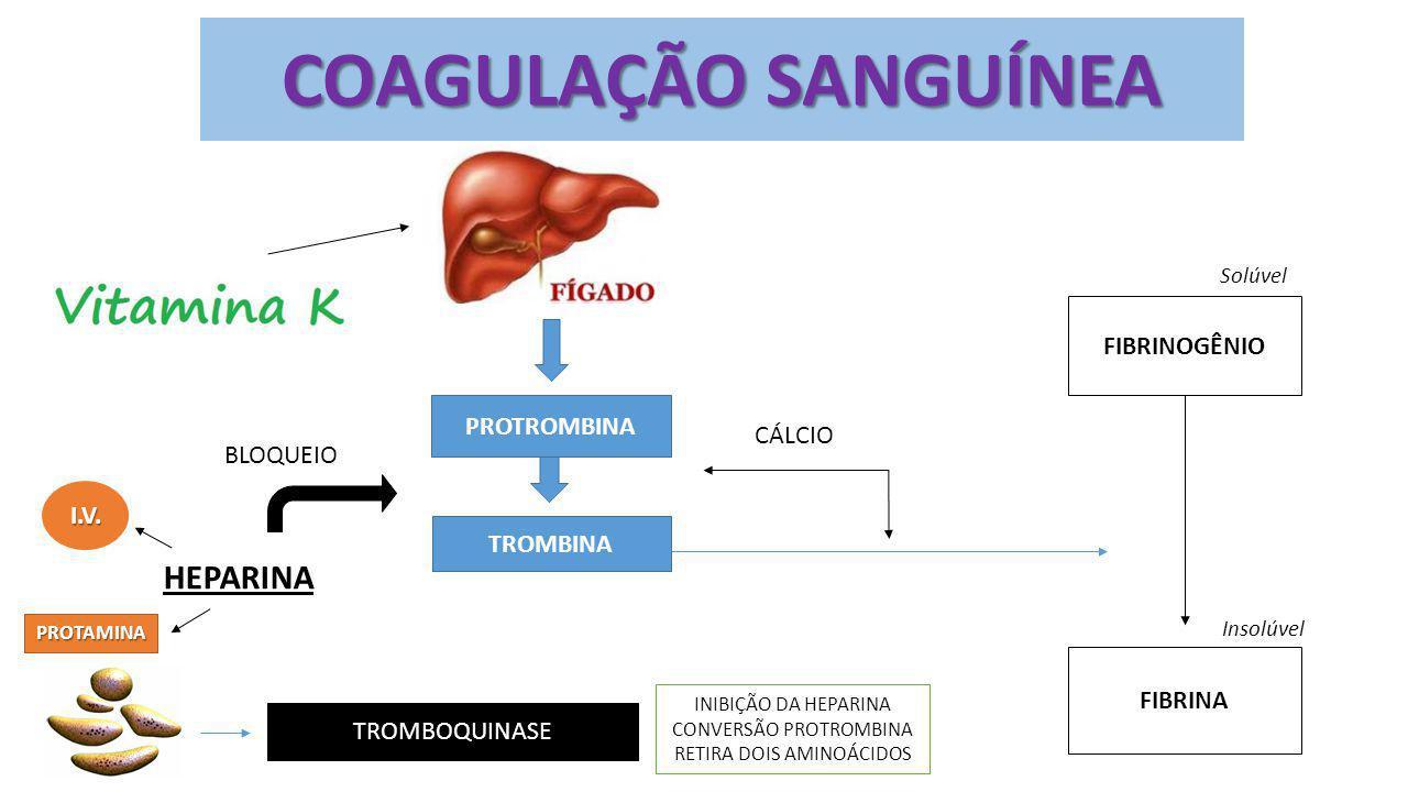 PROTROMBINA TROMBINA HEPARINA BLOQUEIO FIBRINOGÊNIO FIBRINA CÁLCIO TROMBOQUINASE INIBIÇÃO DA HEPARINA CONVERSÃO PROTROMBINA RETIRA DOIS AMINOÁCIDOS So