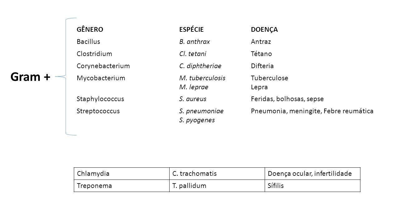 GÊNEROESPÉCIEDOENÇA BacillusB. anthraxAntraz ClostridiumCl. tetaniTétano CorynebacteriumC. diphtheriaeDifteria MycobacteriumM. tuberculosis M. leprae