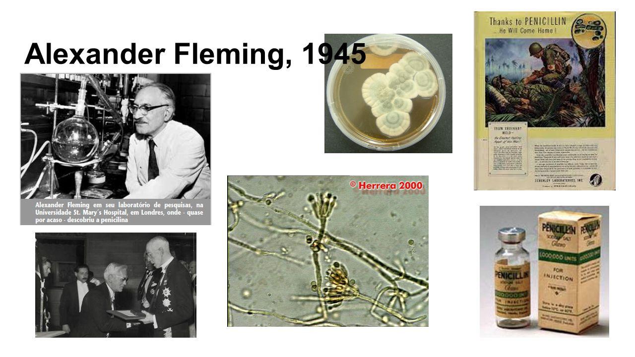 Alexander Fleming, 1945
