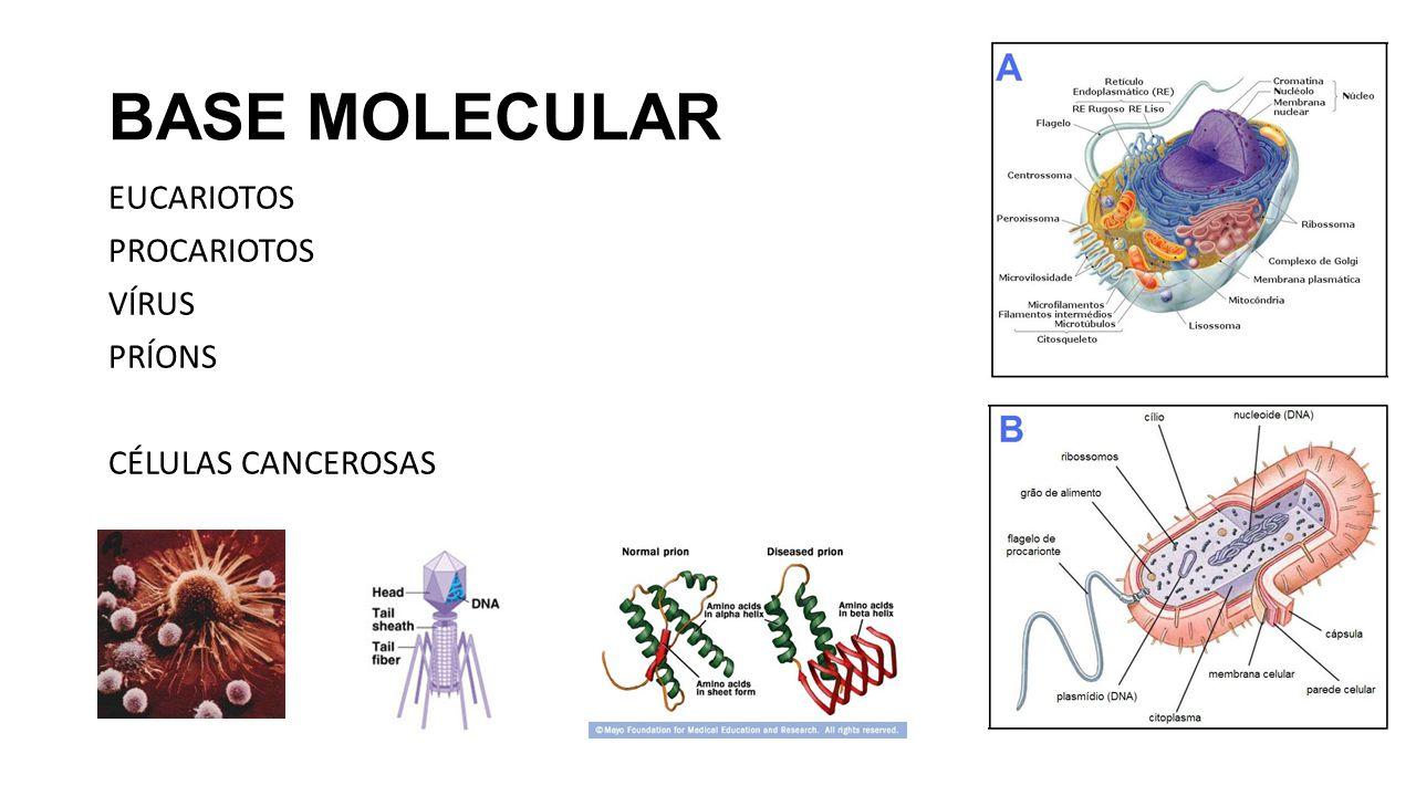 BASE MOLECULAR EUCARIOTOS PROCARIOTOS VÍRUS PRÍONS CÉLULAS CANCEROSAS