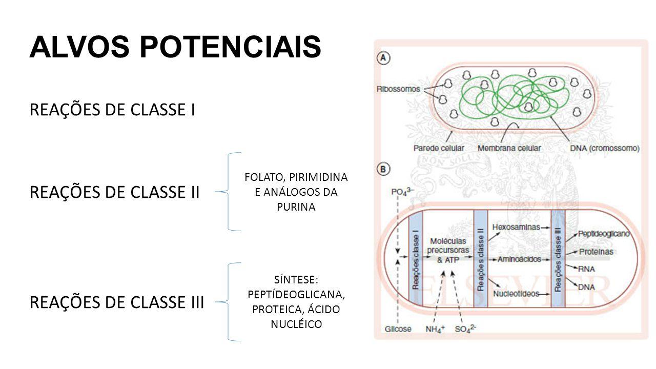 ALVOS POTENCIAIS REAÇÕES DE CLASSE I REAÇÕES DE CLASSE II REAÇÕES DE CLASSE III FOLATO, PIRIMIDINA E ANÁLOGOS DA PURINA SÍNTESE: PEPTÍDEOGLICANA, PROTEICA, ÁCIDO NUCLÉICO
