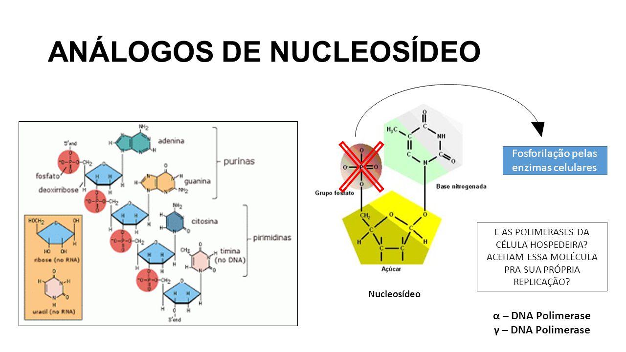 Nucleosídeo Fosforilação pelas enzimas celulares E AS POLIMERASES DA CÉLULA HOSPEDEIRA? ACEITAM ESSA MOLÉCULA PRA SUA PRÓPRIA REPLICAÇÃO? α – DNA Poli