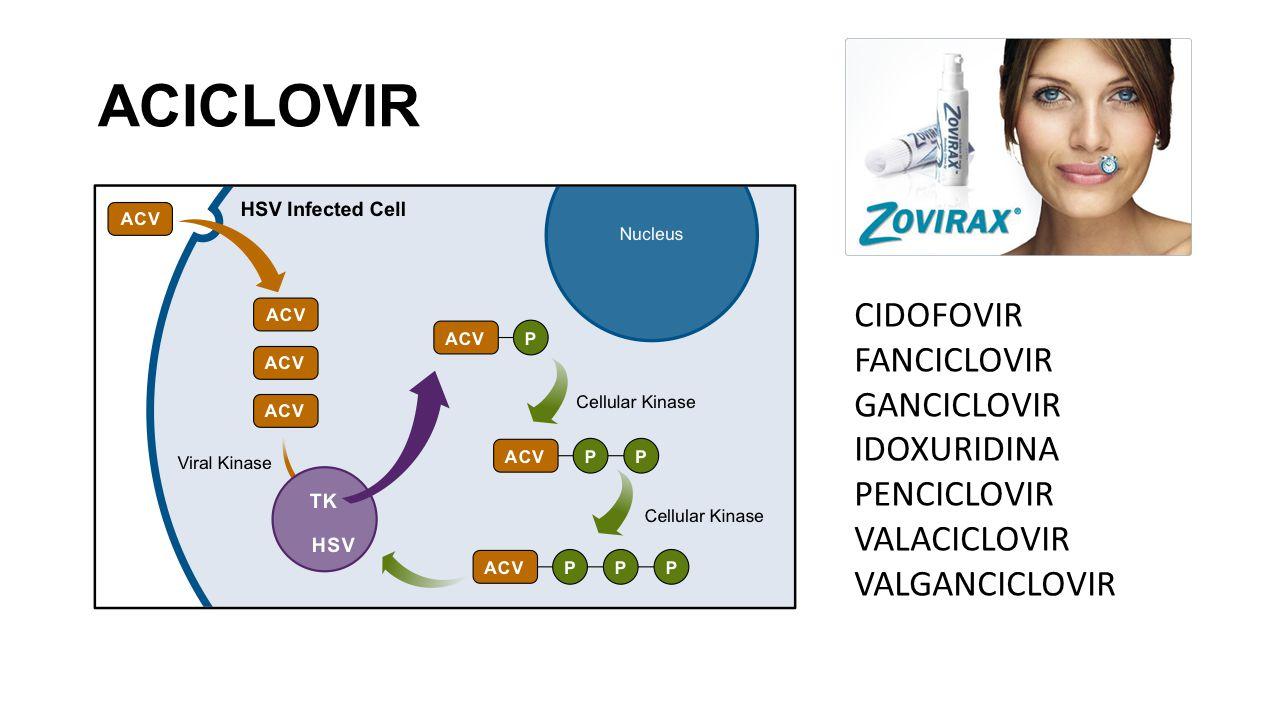 ACICLOVIR CIDOFOVIR FANCICLOVIR GANCICLOVIR IDOXURIDINA PENCICLOVIR VALACICLOVIR VALGANCICLOVIR
