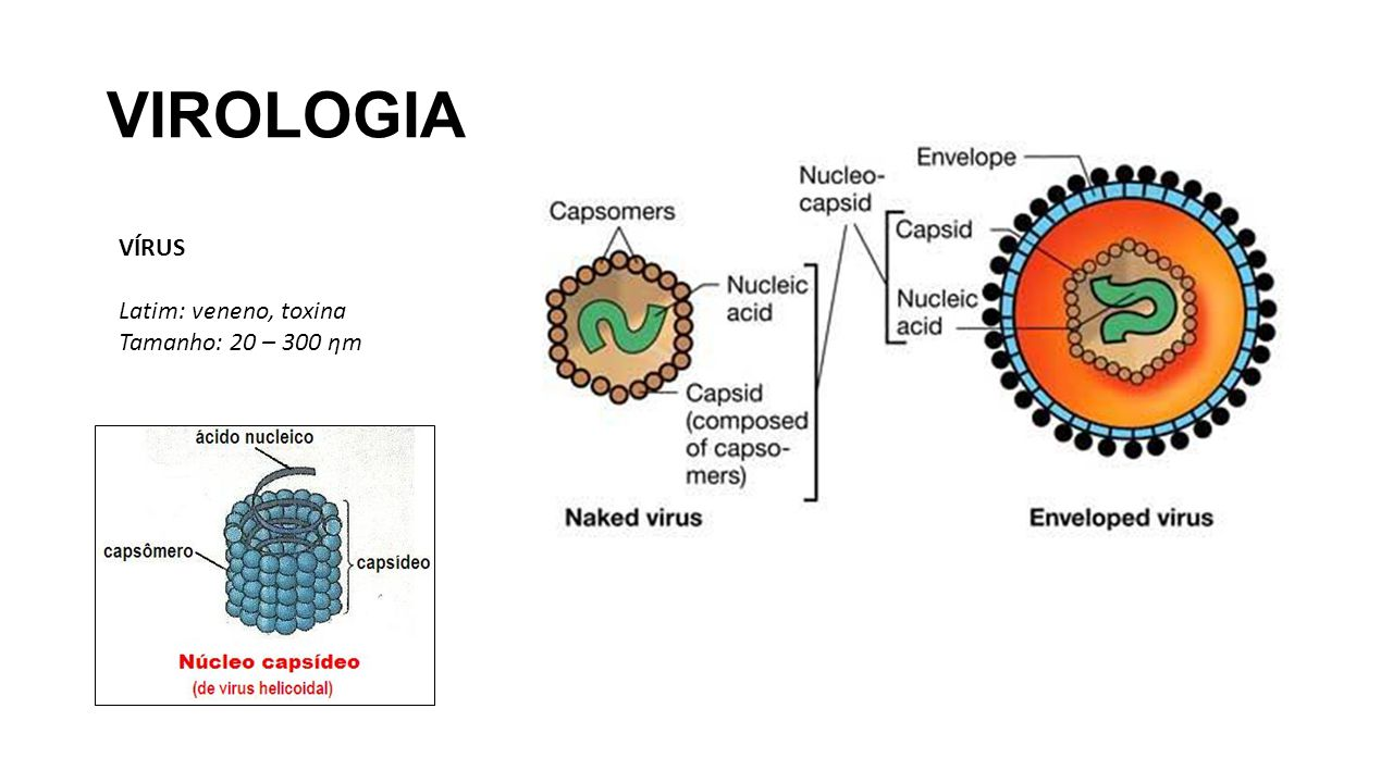 VIROLOGIA VÍRUS Latim: veneno, toxina Tamanho: 20 – 300 ƞm