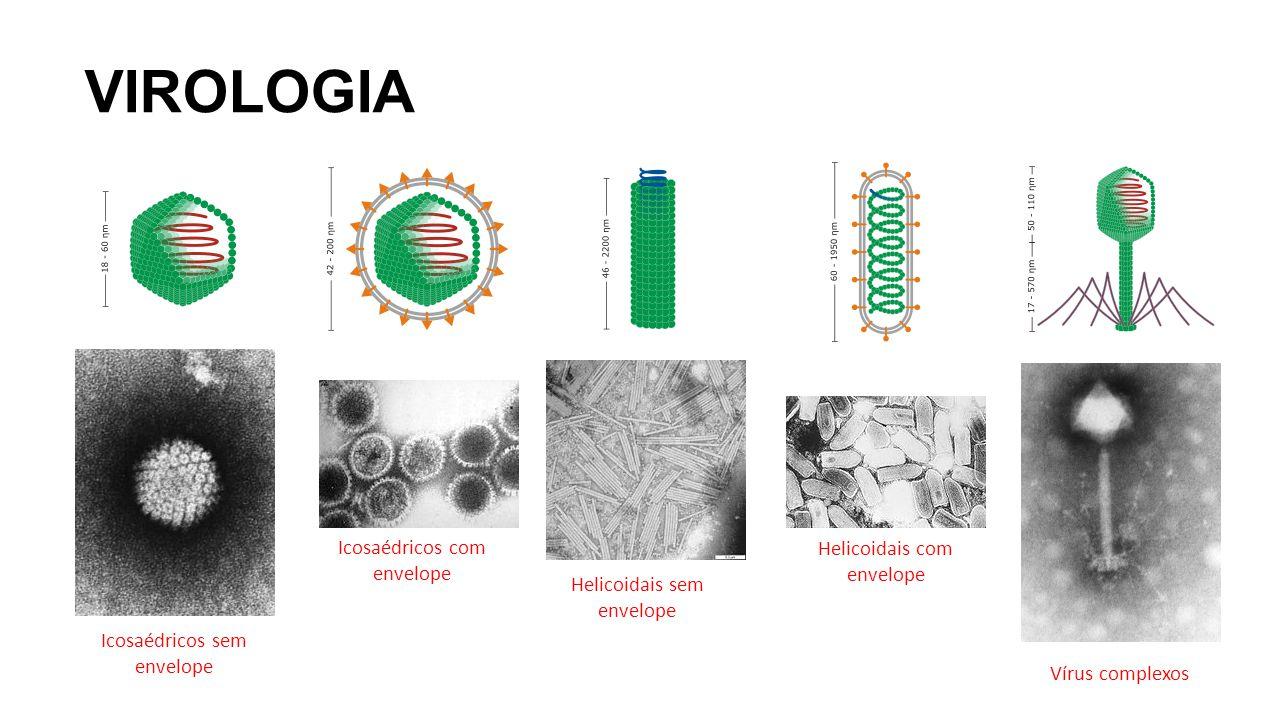 VIROLOGIA Icosaédricos sem envelope Icosaédricos com envelope Helicoidais sem envelope Helicoidais com envelope Vírus complexos
