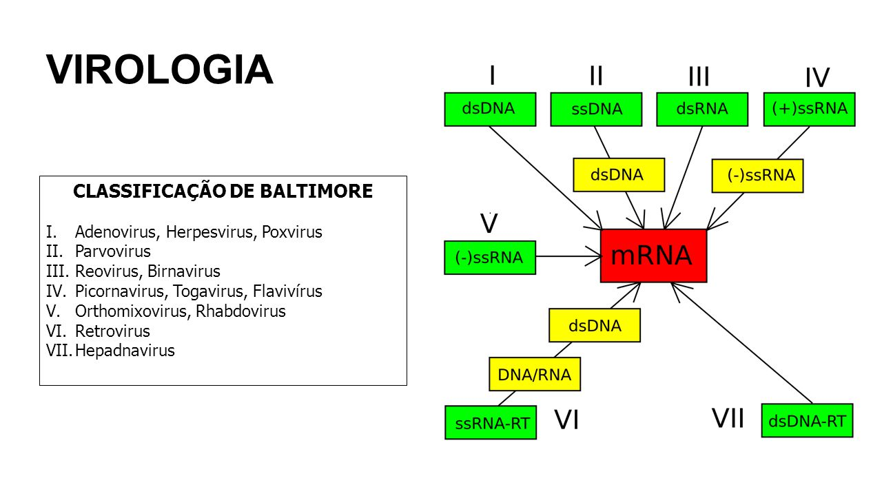 VIROLOGIA CLASSIFICAÇÃO DE BALTIMORE I.Adenovirus, Herpesvirus, Poxvirus II.Parvovirus III.Reovirus, Birnavirus IV.Picornavirus, Togavirus, Flavivírus