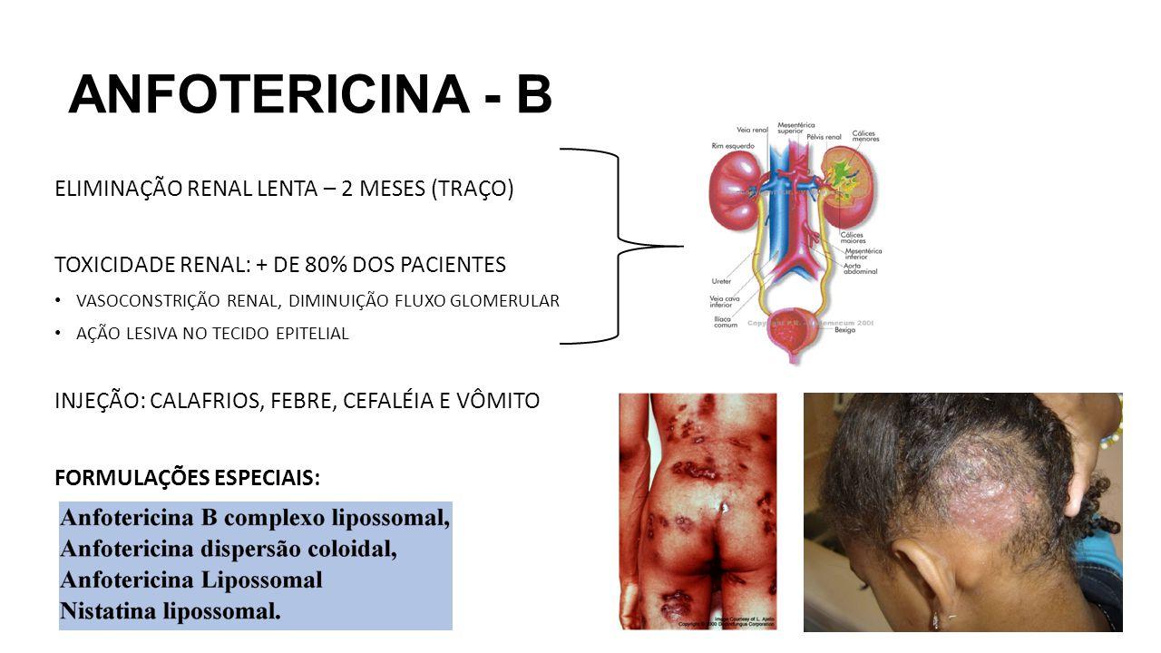 ANFOTERICINA - B ELIMINAÇÃO RENAL LENTA – 2 MESES (TRAÇO) TOXICIDADE RENAL: + DE 80% DOS PACIENTES VASOCONSTRIÇÃO RENAL, DIMINUIÇÃO FLUXO GLOMERULAR A