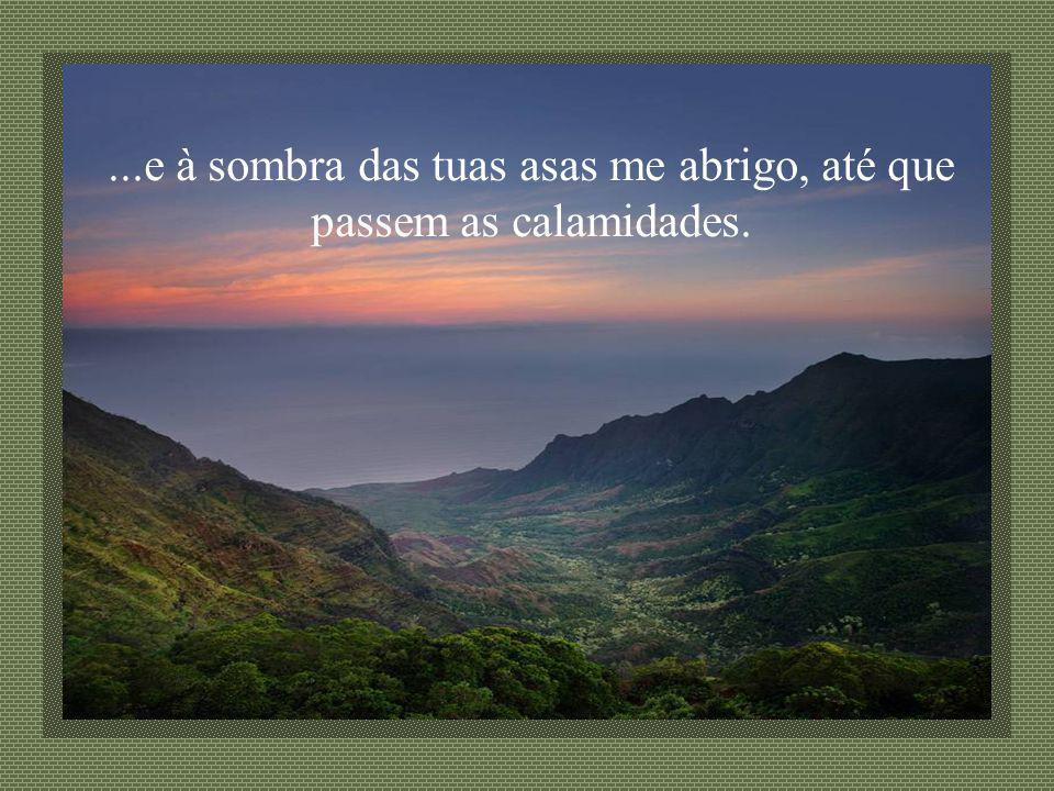 ...e à sombra das tuas asas me abrigo, até que passem as calamidades.