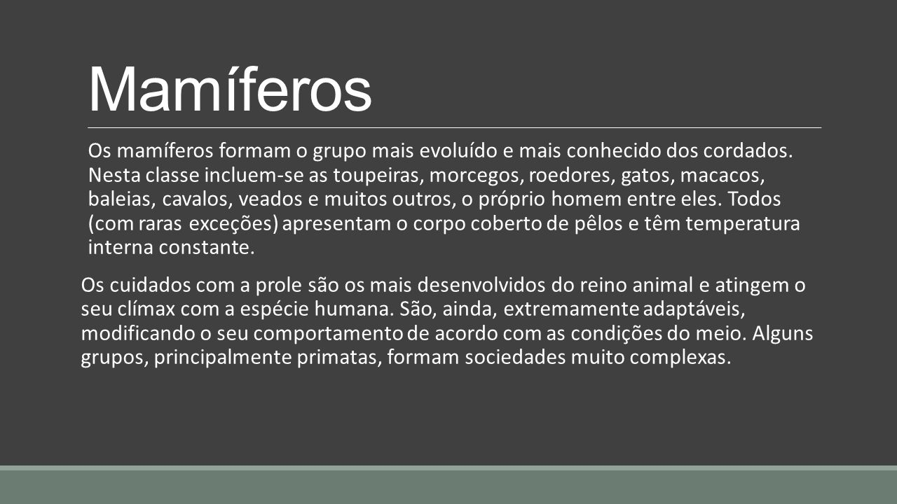 Mamíferos Os mamíferos formam o grupo mais evoluído e mais conhecido dos cordados. Nesta classe incluem-se as toupeiras, morcegos, roedores, gatos, ma