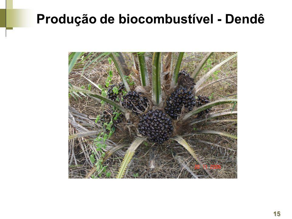 Produção de biocombustível - Dendê 15