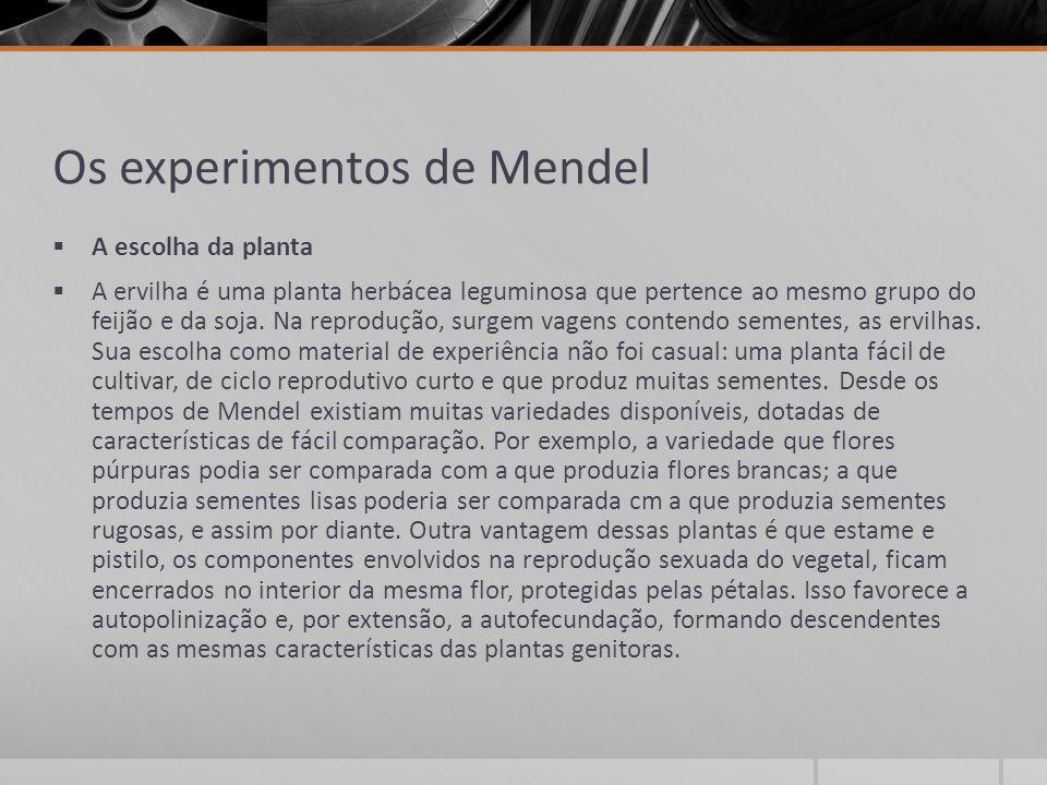 Os experimentos de Mendel  A escolha da planta  A ervilha é uma planta herbácea leguminosa que pertence ao mesmo grupo do feijão e da soja. Na repro