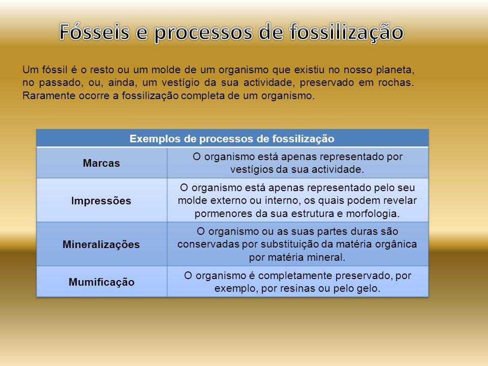 Um fóssil é o resto ou um molde de um organismo que existiu no nosso planeta, no passado, ou, ainda, um vestígio da sua actividade, preservado em rochas.
