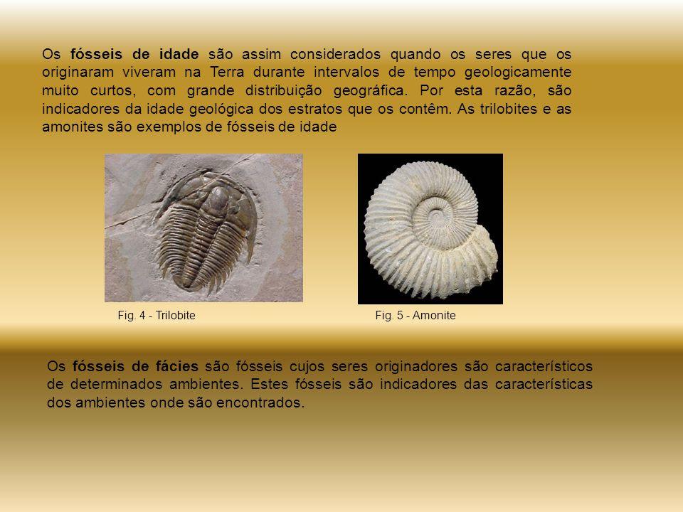 Os fósseis de idade são assim considerados quando os seres que os originaram viveram na Terra durante intervalos de tempo geologicamente muito curtos, com grande distribuição geográfica.