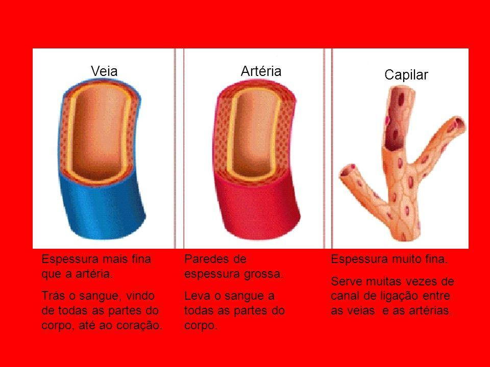 Veia Artéria Capilar Espessura mais fina que a artéria. Trás o sangue, vindo de todas as partes do corpo, até ao coração. Paredes de espessura grossa.