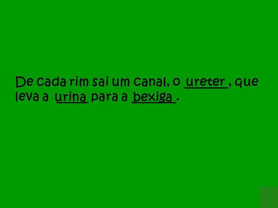 ureterDe cada rim sai um canal, o _______, que leva a _____ para a _______. urinabexiga
