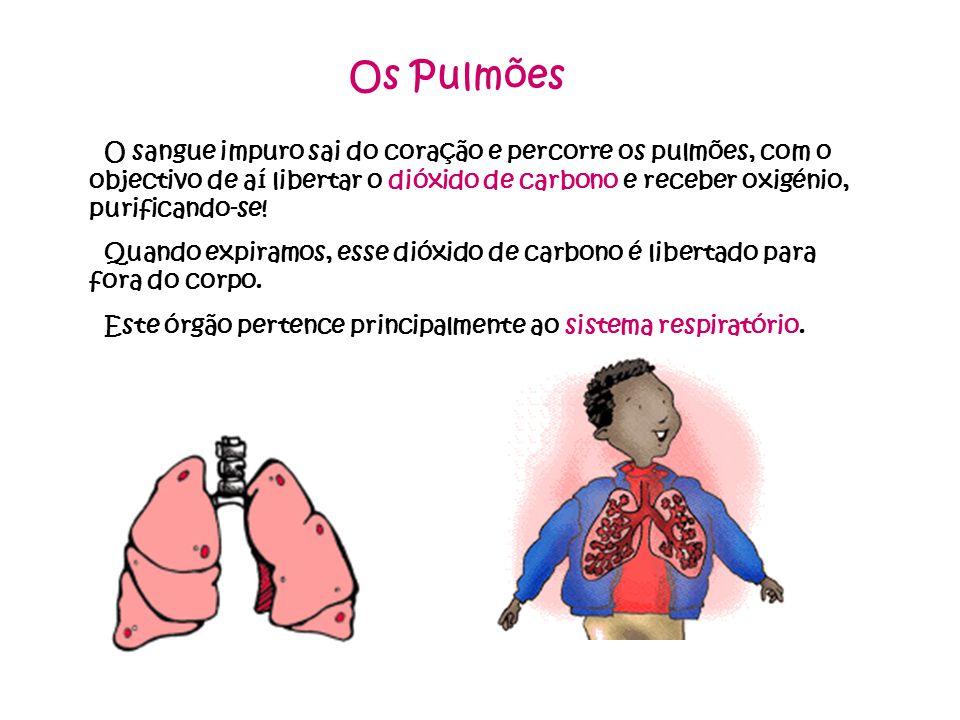 Os Pulmões O sangue impuro sai do coração e percorre os pulmões, com o objectivo de aí libertar o dióxido de carbono e receber oxigénio, purificando-se.