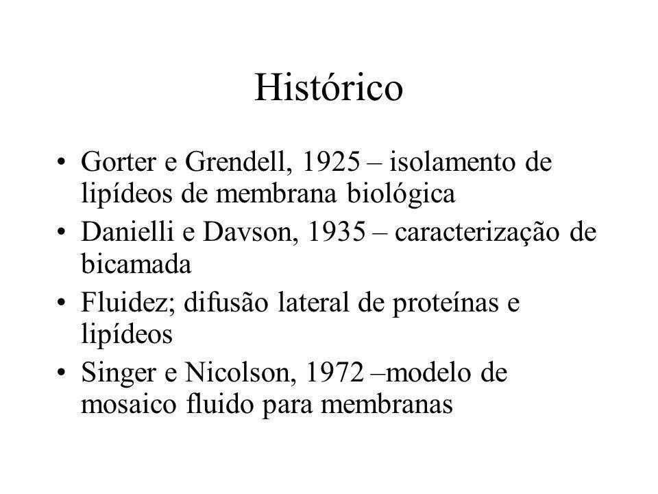 Histórico Gorter e Grendell, 1925 – isolamento de lipídeos de membrana biológica Danielli e Davson, 1935 – caracterização de bicamada Fluidez; difusão lateral de proteínas e lipídeos Singer e Nicolson, 1972 –modelo de mosaico fluido para membranas
