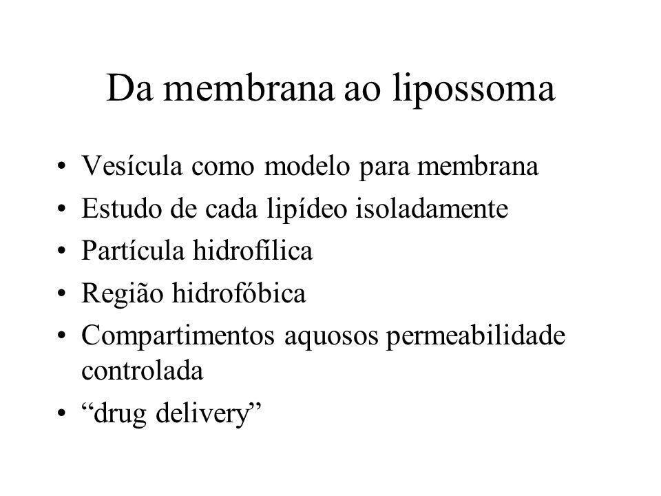 Da membrana ao lipossoma Vesícula como modelo para membrana Estudo de cada lipídeo isoladamente Partícula hidrofílica Região hidrofóbica Compartimentos aquosos permeabilidade controlada drug delivery