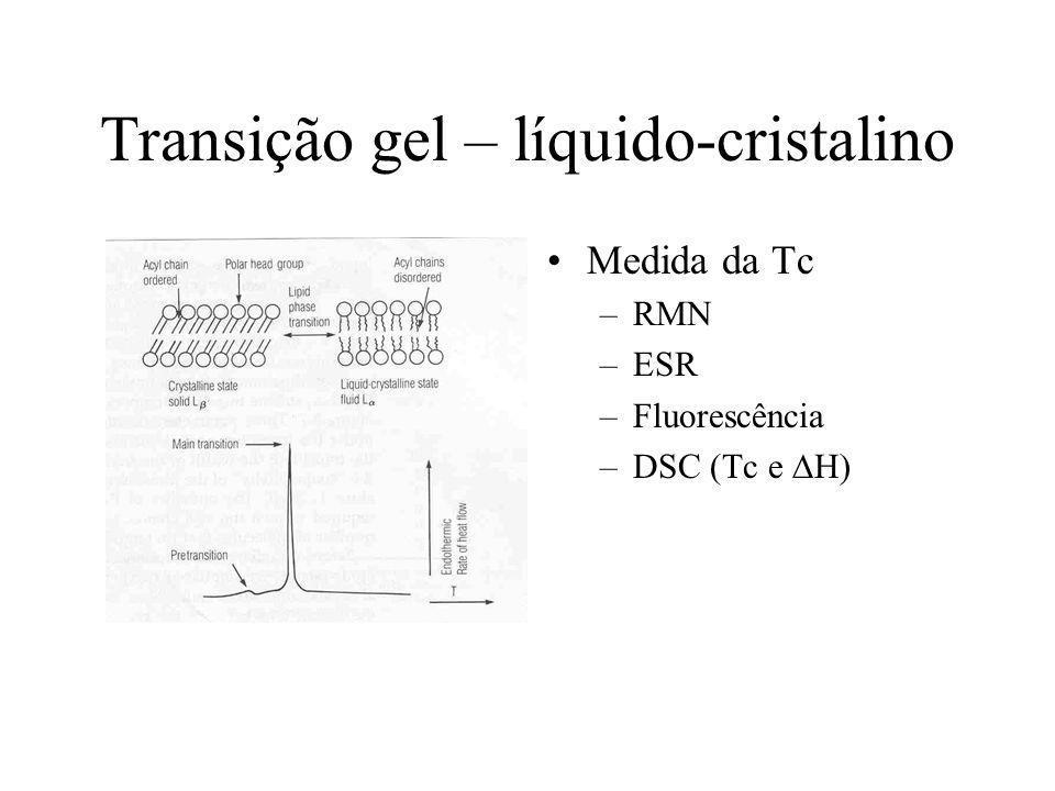 Fatores que afetam a Tc Estrutura do lipídeo –Tamanho da cadeia –Insaturação –Cabeça polar Efeito de solutos –Colesterol