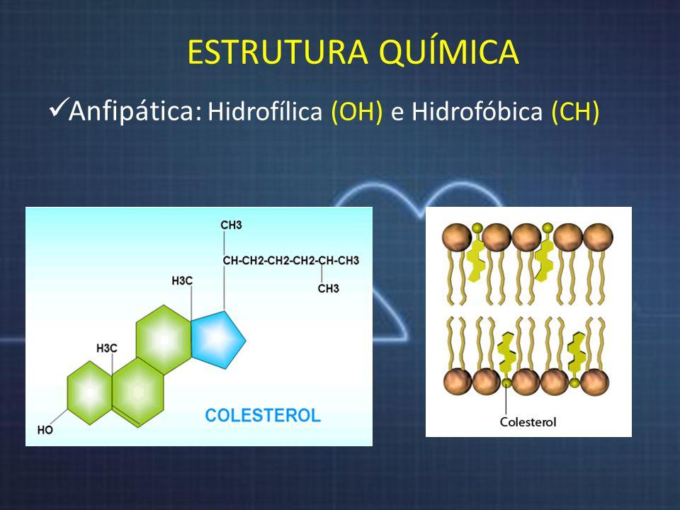 ESTRUTURA QUÍMICA Anfipática: Hidrofílica (OH) e Hidrofóbica (CH)