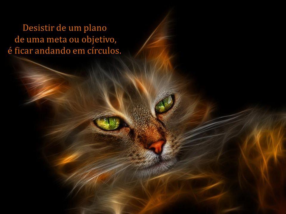 Não aceite uma vida triste, sem cor, sem amor, sem saúde, sem dinheiro, sem respeito.
