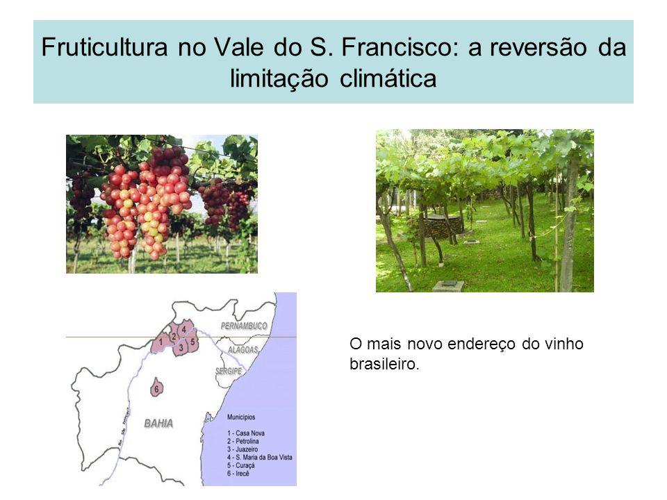 Fruticultura no Vale do S. Francisco: a reversão da limitação climática O mais novo endereço do vinho brasileiro.