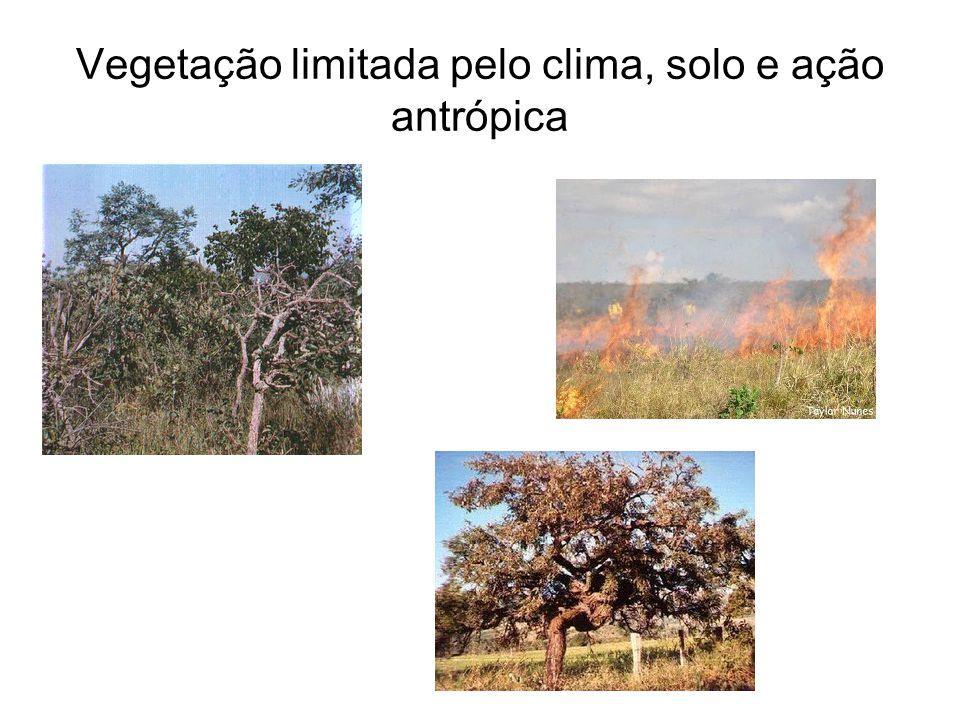 Vegetação limitada pelo clima, solo e ação antrópica