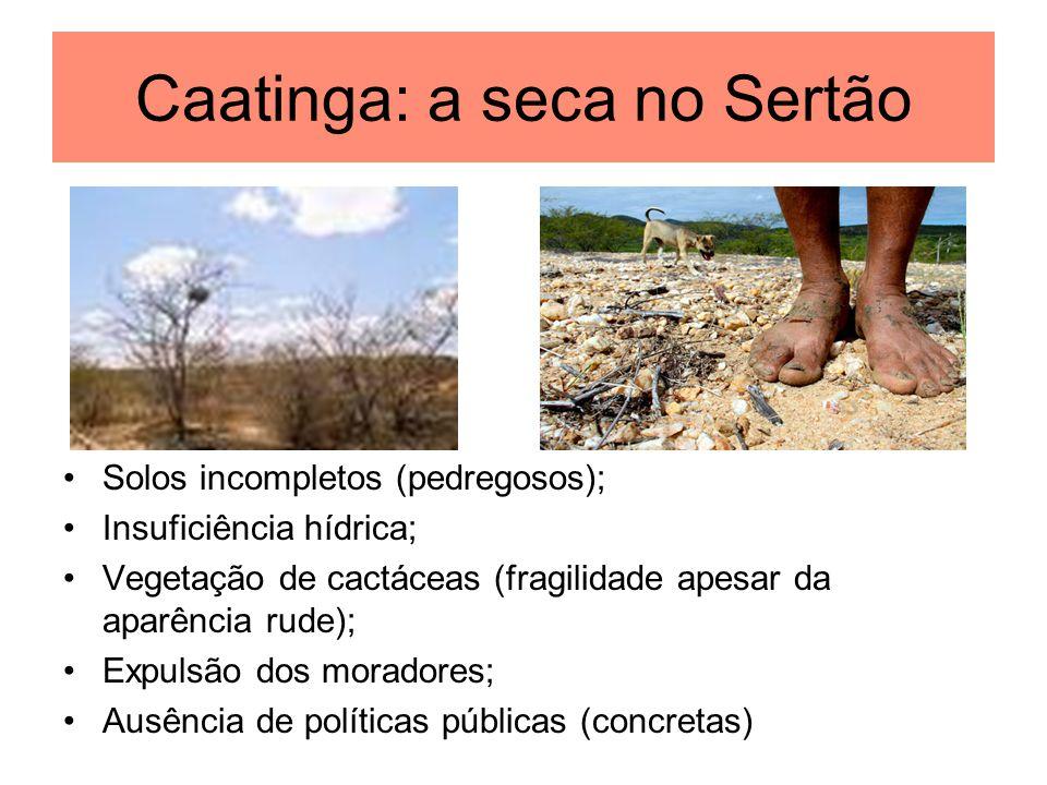 Caatinga: a seca no Sertão Solos incompletos (pedregosos); Insuficiência hídrica; Vegetação de cactáceas (fragilidade apesar da aparência rude); Expul