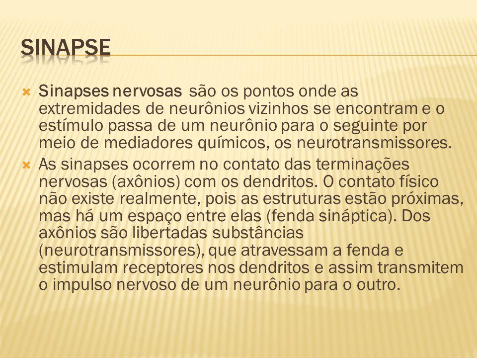  Sinapses nervosas são os pontos onde as extremidades de neurônios vizinhos se encontram e o estímulo passa de um neurônio para o seguinte por meio de mediadores químicos, os neurotransmissores.