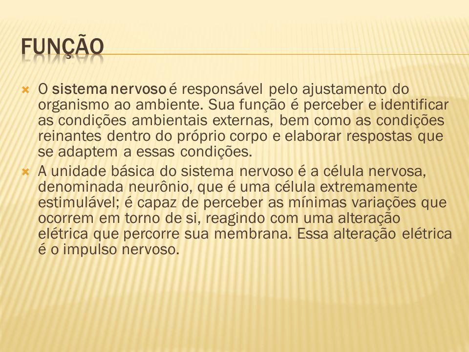  Neurônio é a célula do sistema nervoso responsável pela condução do impulso nervoso.