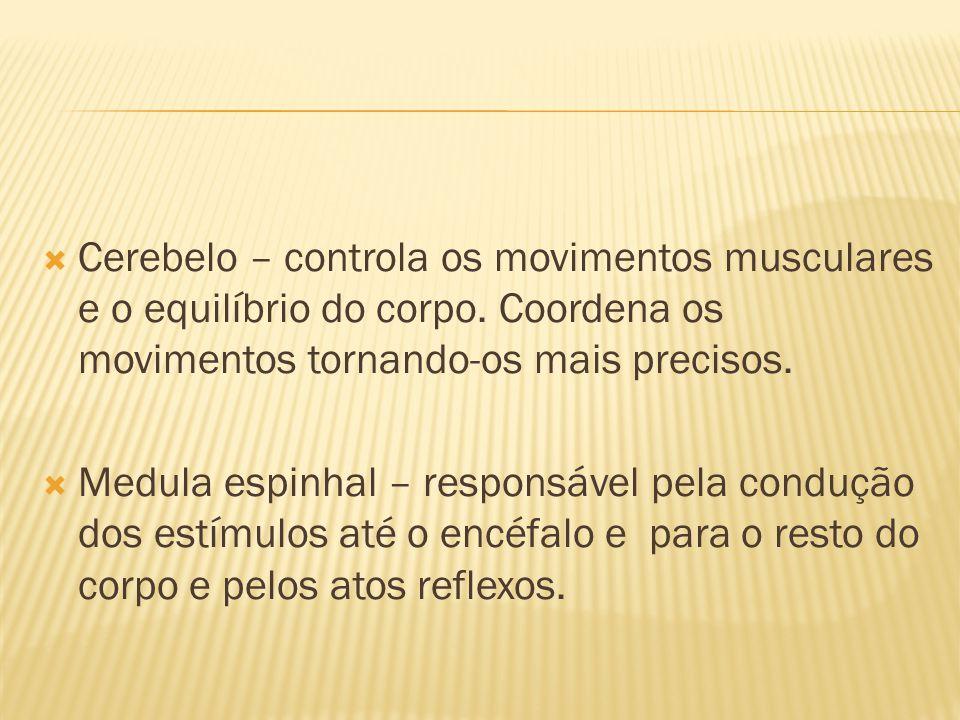  Cerebelo – controla os movimentos musculares e o equilíbrio do corpo. Coordena os movimentos tornando-os mais precisos.  Medula espinhal – responsá