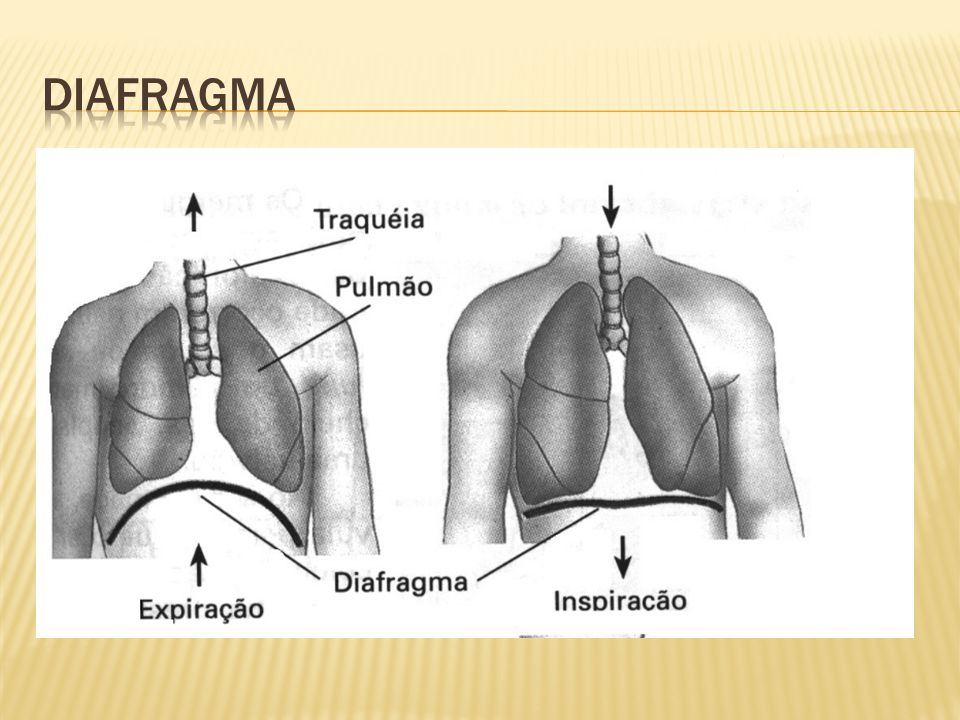  Encéfalo  Medula espinhal Crânio, couro cabeludo Meninges Músculos Vértebras Meninges Líquido cefalorraquidiano