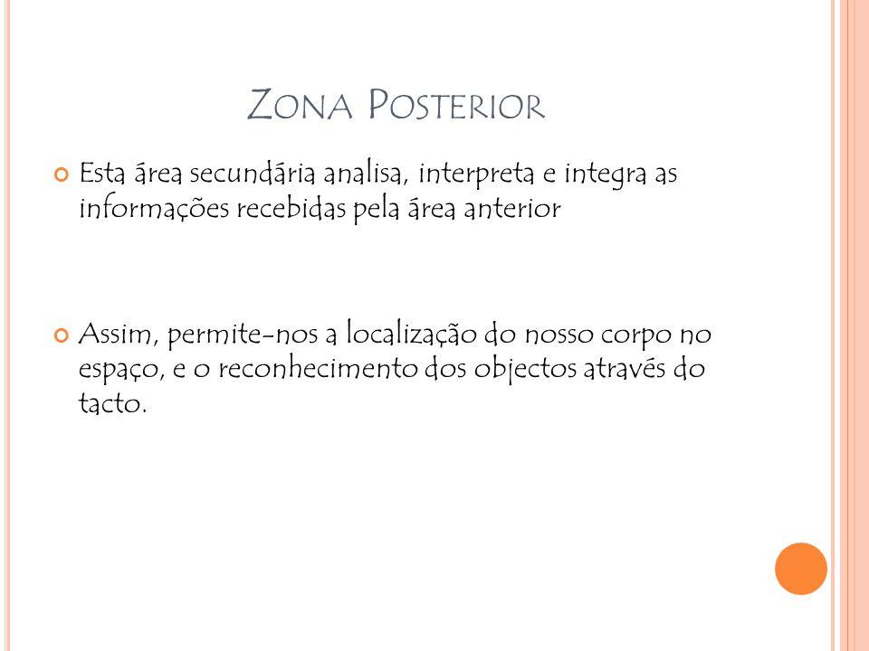 Z ONA P OSTERIOR Esta área secundária analisa, interpreta e integra as informações recebidas pela área anterior Assim, permite-nos a localização do no