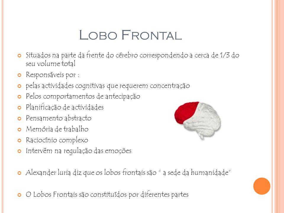 L OBO F RONTAL Situados na parte da frente do cérebro correspondendo a cerca de 1/3 do seu volume total Responsáveis por : pelas actividades cognitiva