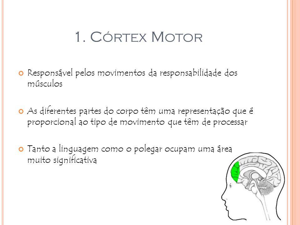 1. C ÓRTEX M OTOR Responsável pelos movimentos da responsabilidade dos músculos As diferentes partes do corpo têm uma representação que é proporcional