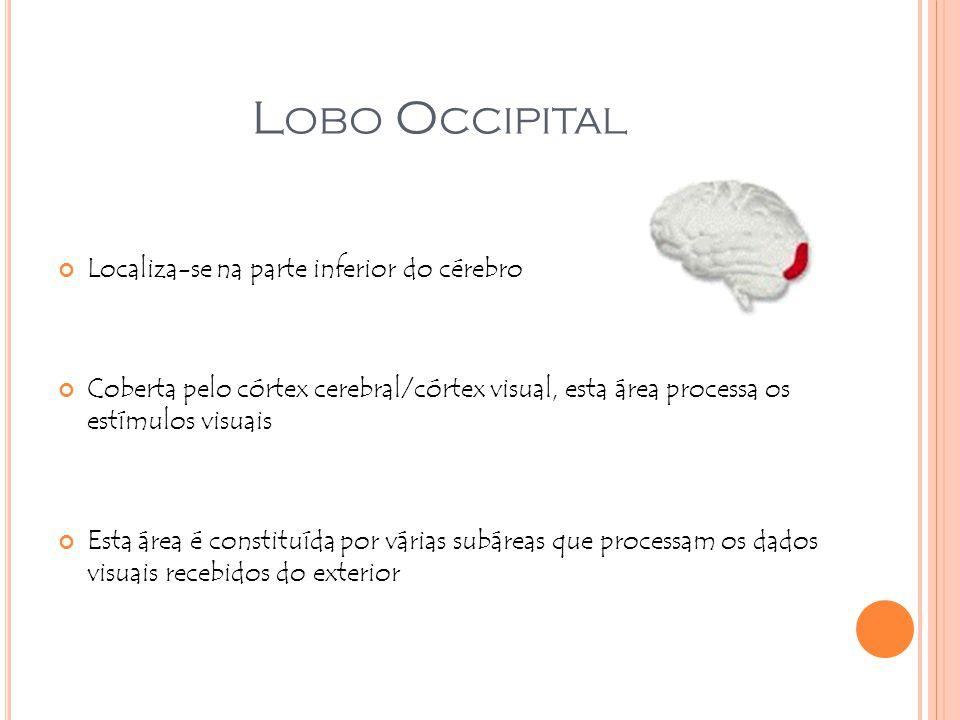 L OBO O CCIPITAL Localiza-se na parte inferior do cérebro Coberta pelo córtex cerebral/córtex visual, esta área processa os estímulos visuais Esta áre