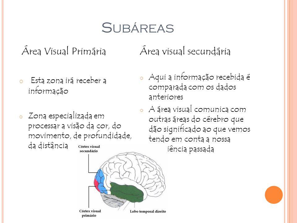S UBÁREAS Área Visual Primária o Esta zona irá receber a informação o Zona especializada em processar a visão da cor, do movimento, de profundidade, d