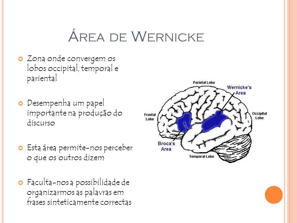 Á REA DE W ERNICKE Zona onde convergem os lobos occipital, temporal e pariental Desempenha um papel importante na produção do discurso Esta área permi