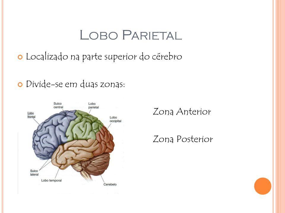 L OBO P ARIETAL Localizado na parte superior do cérebro Divide-se em duas zonas: Zona Anterior Zona Posterior
