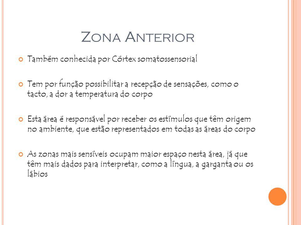 Z ONA A NTERIOR Também conhecida por Córtex somatossensorial Tem por função possibilitar a recepção de sensações, como o tacto, a dor a temperatura do