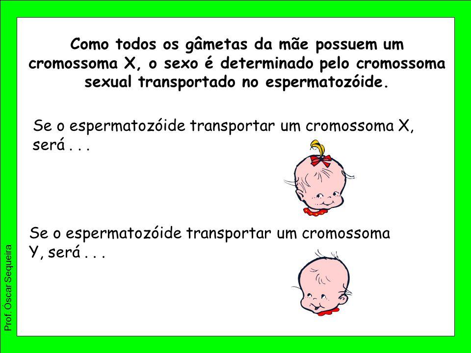 Como todos os gâmetas da mãe possuem um cromossoma X, o sexo é determinado pelo cromossoma sexual transportado no espermatozóide. Se o espermatozóide