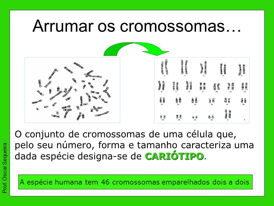Arrumar os cromossomas… A espécie humana tem 46 cromossomas emparelhados dois a dois Prof. Óscar Sequeira CARIÓTIPO O conjunto de cromossomas de uma c