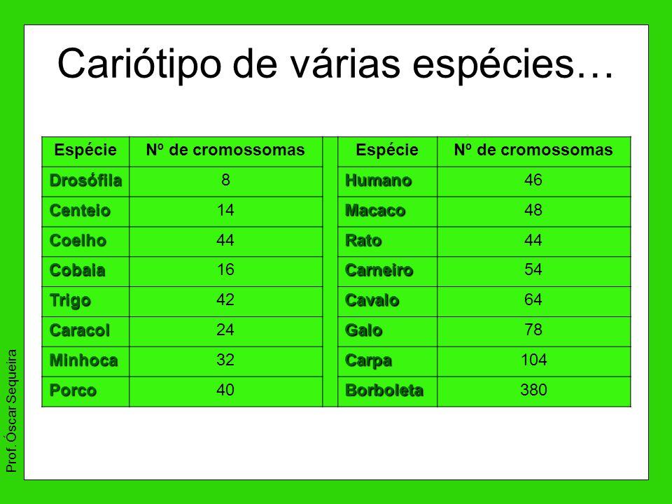 Cariótipo de várias espécies… EspécieNº de cromossomasEspécieNº de cromossomas Drosófila8Humano46 Centeio14Macaco48 Coelho44Rato Cobaia16Carneiro54 Tr