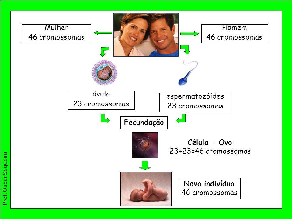 Mulher 46 cromossomas Homem 46 cromossomas óvulo 23 cromossomas espermatozóides 23 cromossomas Fecundação Célula - Ovo 23+23=46 cromossomas Novo indiv