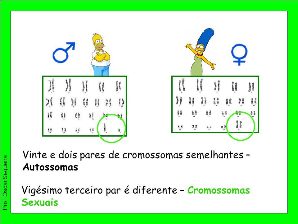 Vigésimo terceiro par é diferente – Cromossomas Sexuais Vinte e dois pares de cromossomas semelhantes – Autossomas Prof. Óscar Sequeira