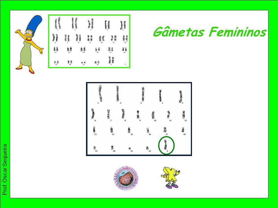 Gâmetas Femininos Prof. Óscar Sequeira