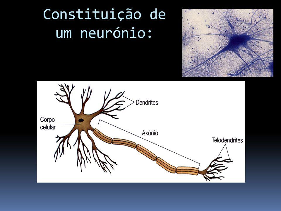 Constituição de um neurónio: