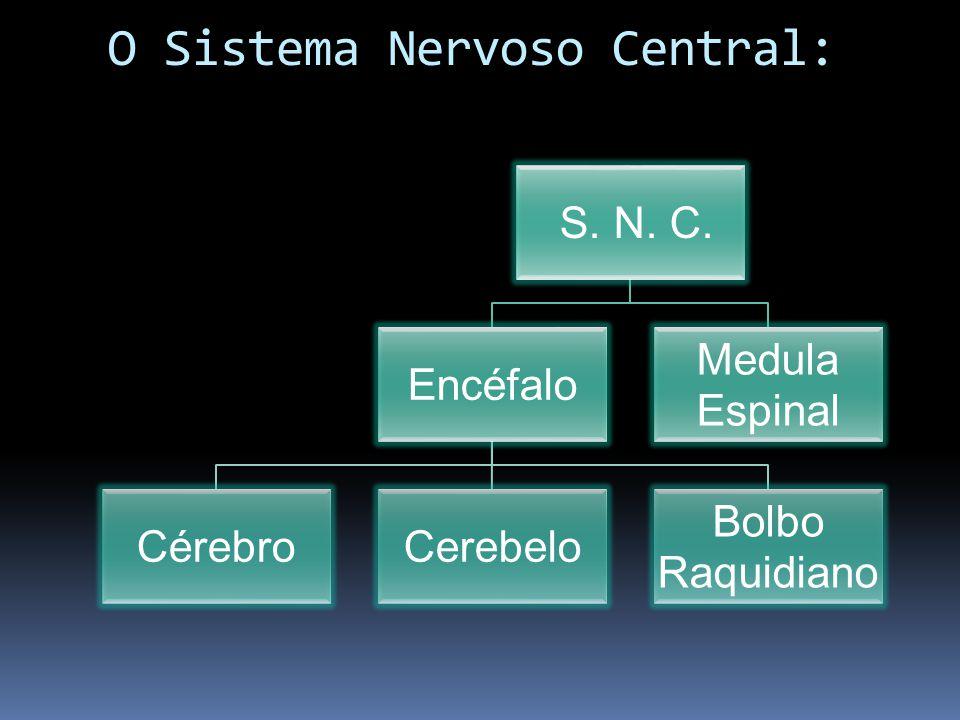 O Sistema Nervoso Central: S. N. C. Encéfalo CérebroCerebelo Bolbo Raquidiano Medula Espinal