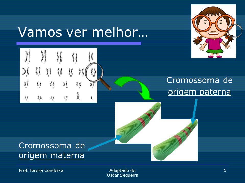 Prof. Teresa CondeixaAdaptado de Óscar Sequeira 5 Cromossoma de origem paterna Cromossoma de origem materna Vamos ver melhor…